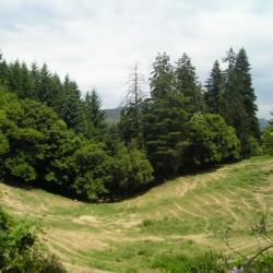 les arbres centenaires