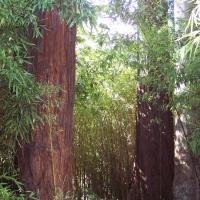 arbres centenaire