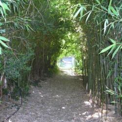 balade dans la bambouseraie