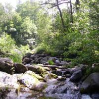 la rivière en été