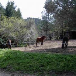 paddock des doubles poneys