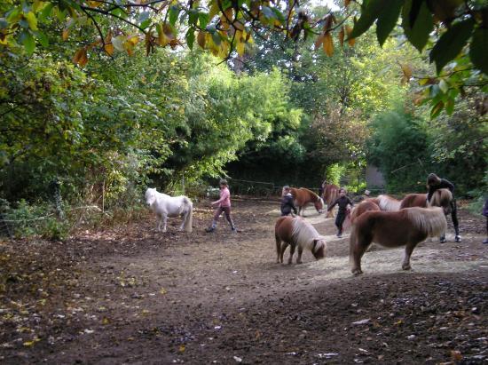 attraper les poneys