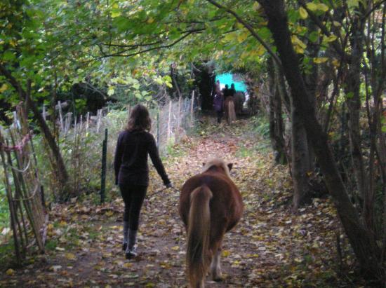 ramener les poneys