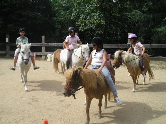 jeux equestres dans la carrière