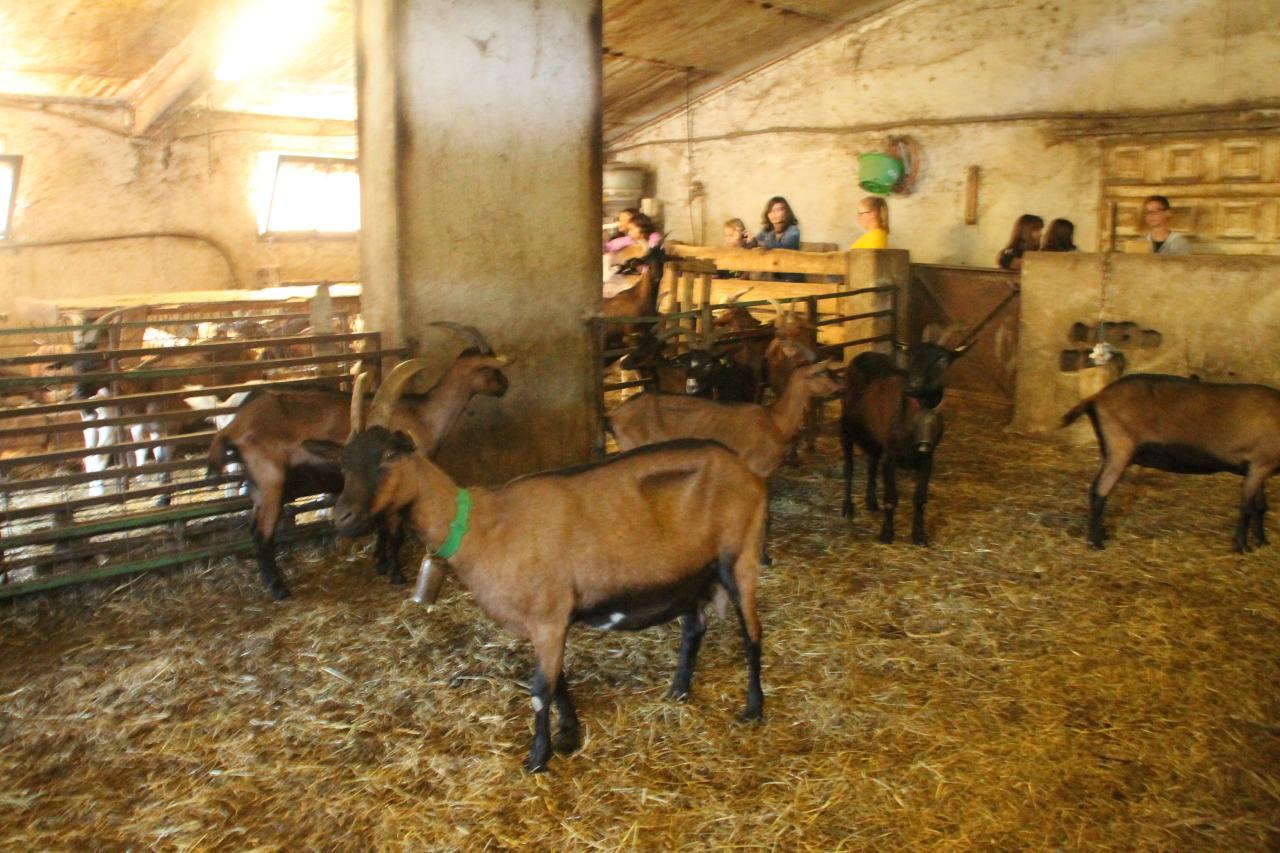 visite chez l'eleveur de chèvres
