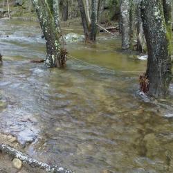 la rivière au printemps